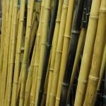 Bambus Abschnitte u. Restposten